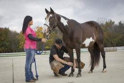 horse foot care